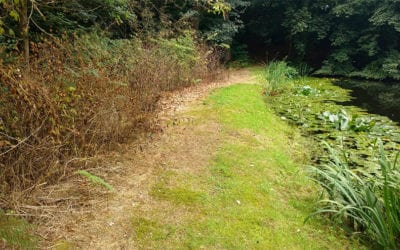 Herbicide treatment of Japanese knotweed on land belonging to a listed building