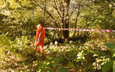 Japanese Knotweed Removal Process